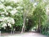 36_Park_2011